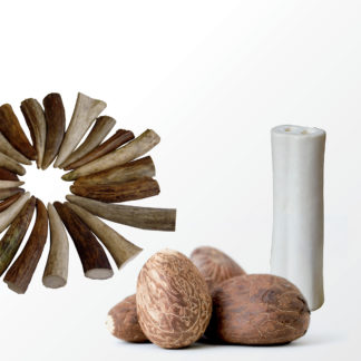 Elchschaufelspitzen-Knochen-Tagua